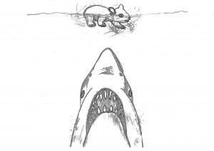 shark-vs-wombat1